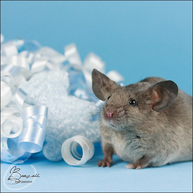 """""""Elevage des Free-Mouses"""", le fil de _Banzaii. 13533374674_3b5d817d46_z"""