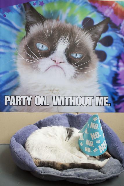 Grumpy Cat Birthday_1