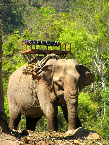 Elefante con montura