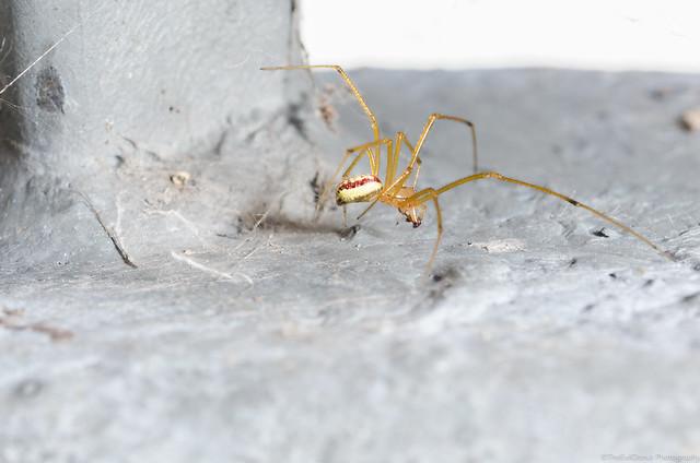 Besoin aide identification guêpe noire et araignée 19532783676_a15d25094f_z