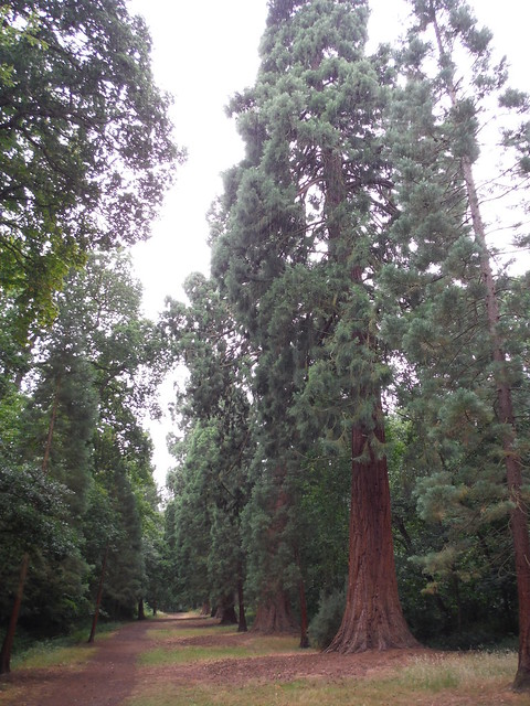 Big Redwoods, Langley Park