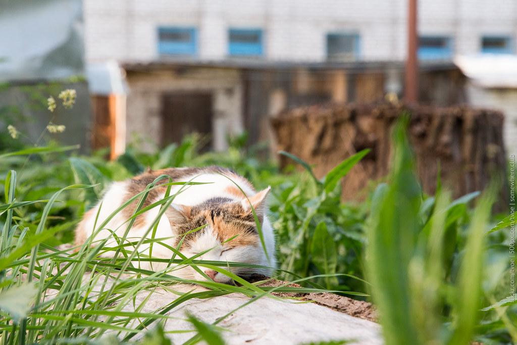 Кошка на бревне в Юрьеве-Польском.
