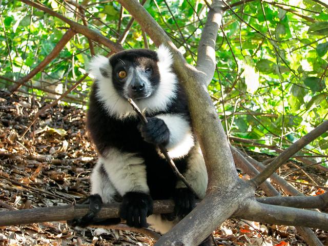Madagascar6 - 021