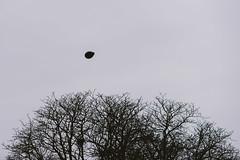 Black Balloon | Kaunas