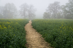 215/365v3 Into the Mist...a path well travelled