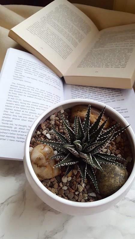 Becoming a Book Influencer