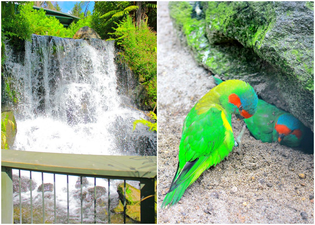rainbow-springs-waterfall-and-lovebirds
