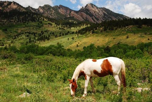 horse foothills mountains landscape colorado el boulder eldorado pasture springs grazing graze pinto dorado eldoradosprings pintohorse