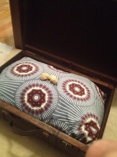 Mugar's New Dog Beds