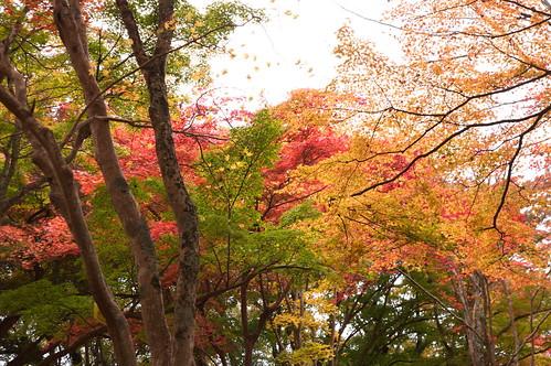 【写真】2012 紅葉 : 笠置山もみじ公園/2020-05-28/IMGP6135