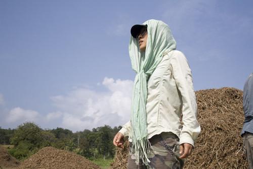 Tacomepai Organic Farm, Pai Thailand 12