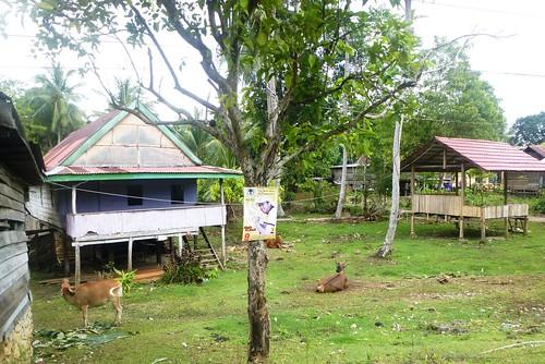 Sulawesi13-Bone-Pare Pare (5)