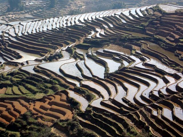 Yunnan III (Feb. 13) Yuanyang-Xinjie
