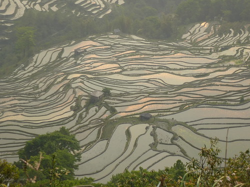 Yunnan13-Yuanyang 24-Bada (34)