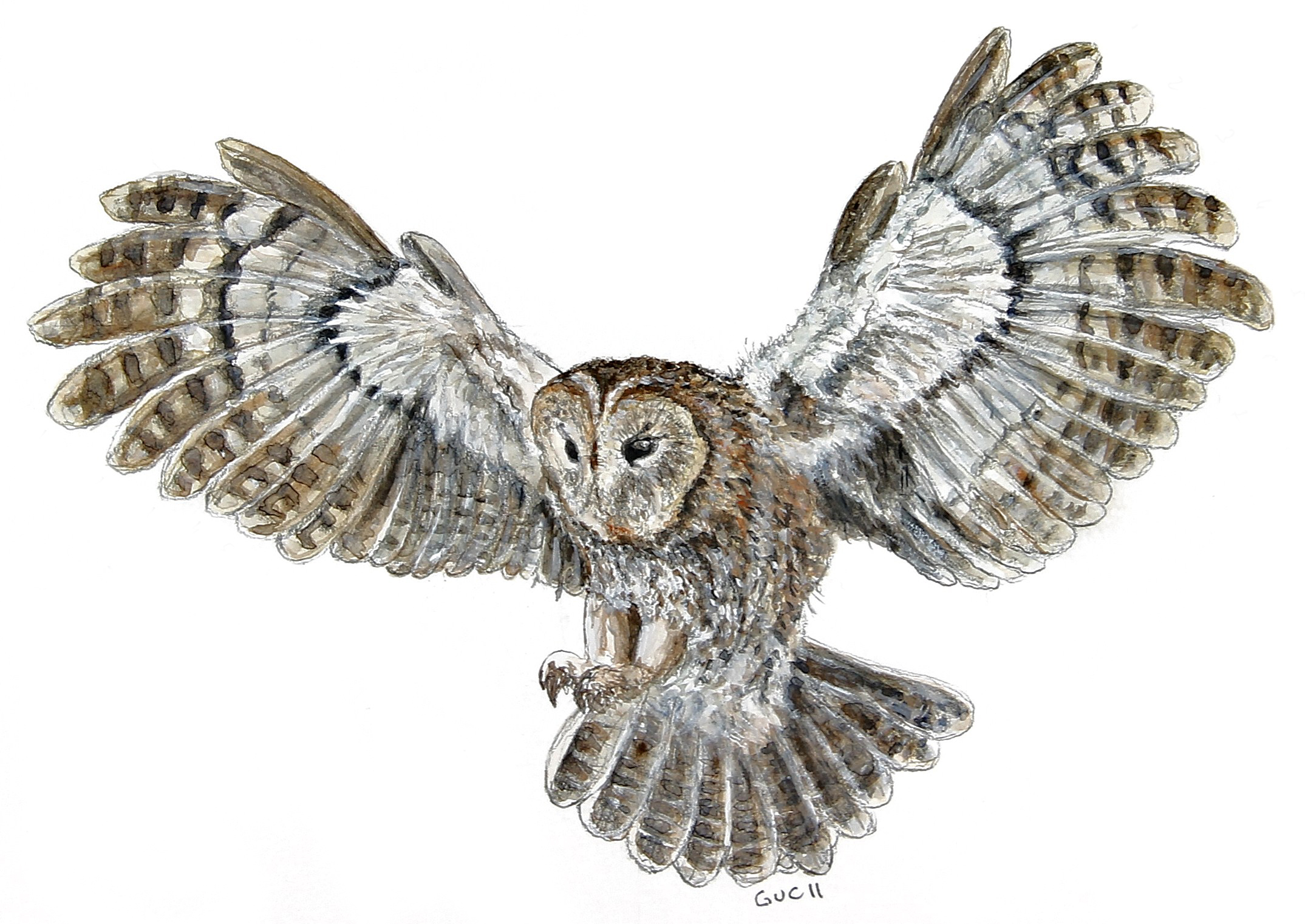Simple flying owl drawing for Cool drawings of owls