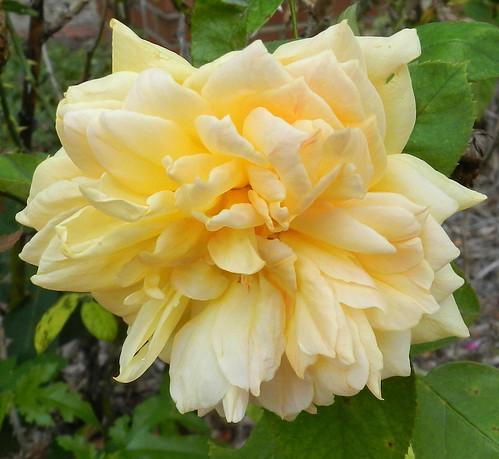 todayflowersDSCN1508