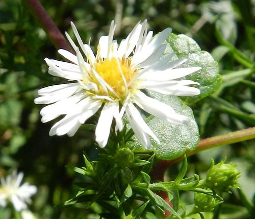 todayflowersDSCN1531