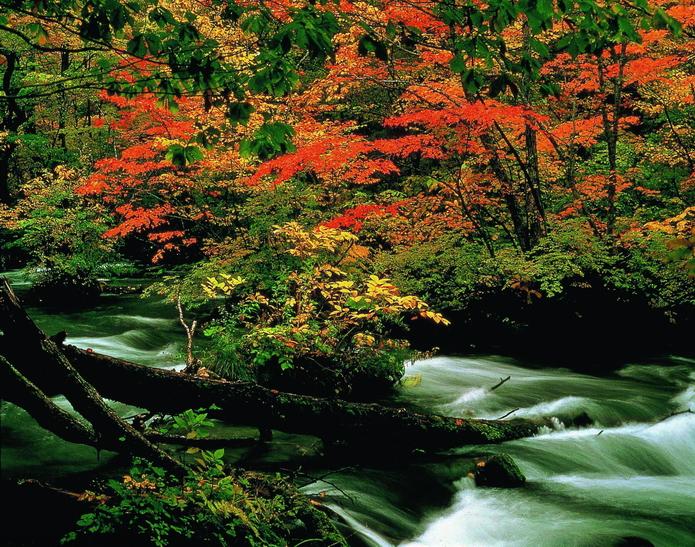 奧入瀨溪流 (2)