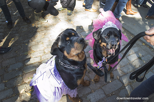 Halloween Dog Costume_Princesses_Gizmo and Brinks_Rottweilers
