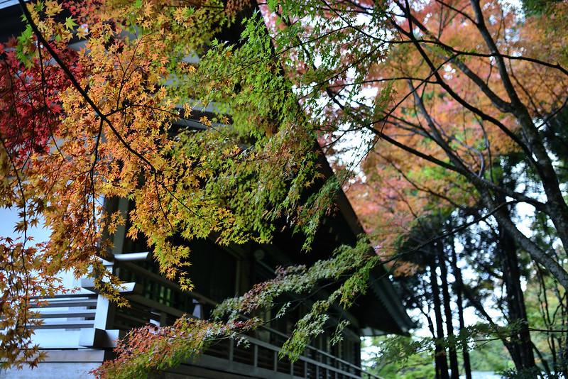 2013.11.14 京都 三千院