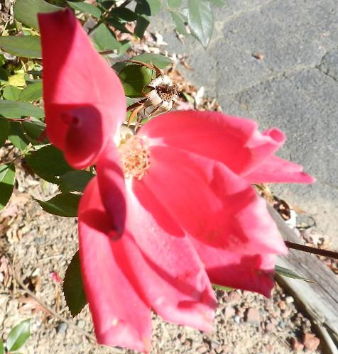 today's flowersDSCN5536