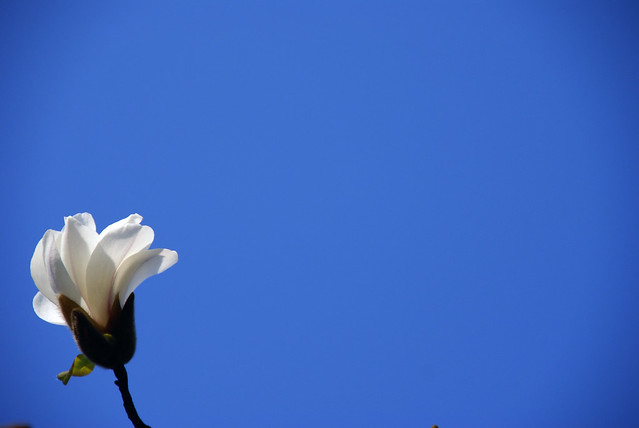写真_確実に春1