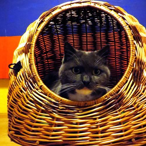cat-home