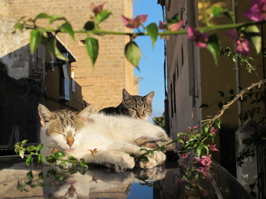 Cats of Dénia