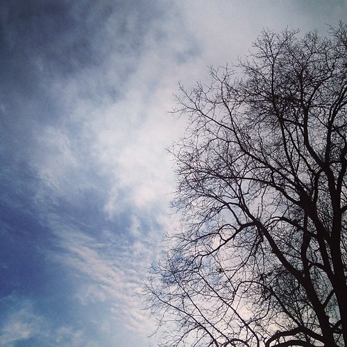 My love for winter trees against winter sky continues.