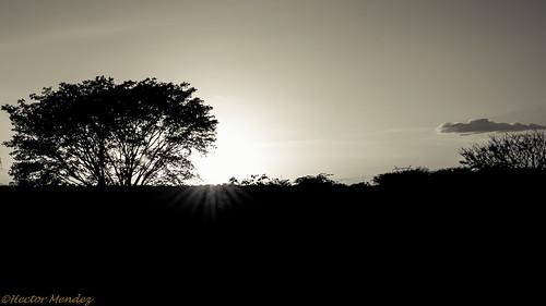 sunset atardecer nikon venezuela inmenso guárico d3000