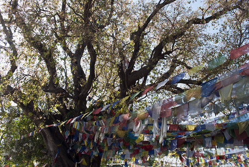 travel nepal tree travelling garden asian asia buddha buddhist flag buddhism flags nepalese prayerflags buddhisttemple nepali prayerflag southasia southasian travelphotography lumbini rupandehi rupandehidistrict