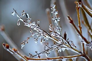 ~ ice art ~