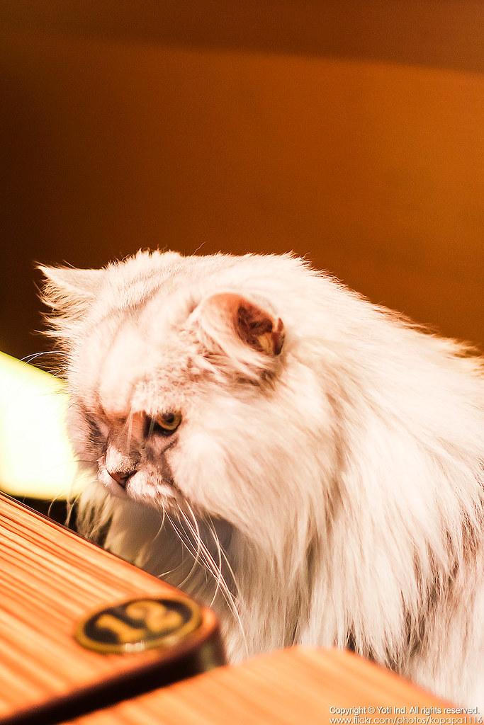 元氣貓主題餐廳 IMG_6135