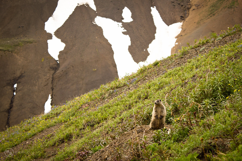 The Chilcotin Marmot's were unsure about our mountain bikes