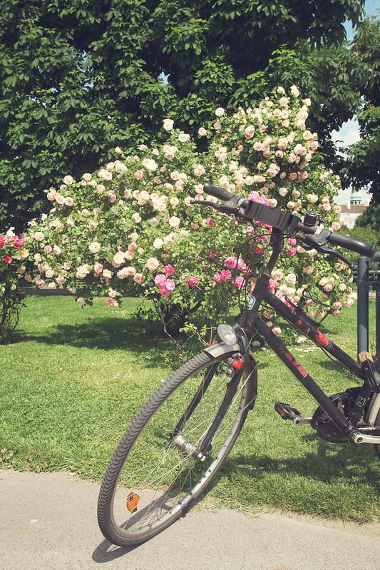 bikeandblooms