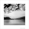8 Ennerdale Water Lake Ness Monster BW LE