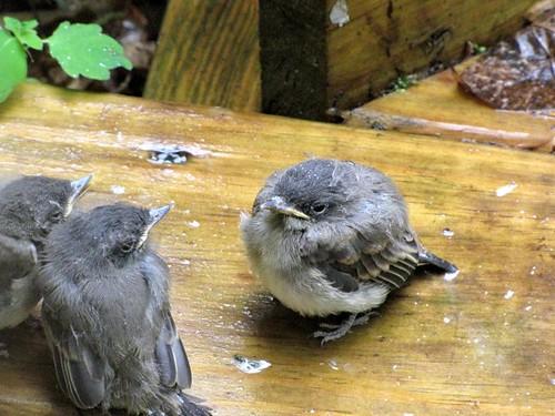 Birdies-8