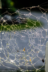 165/365 - Cobweb