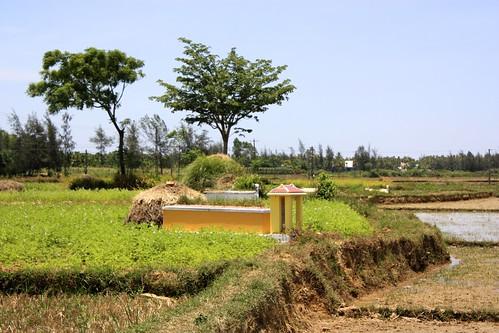 A tomb overlooks the rice paddies