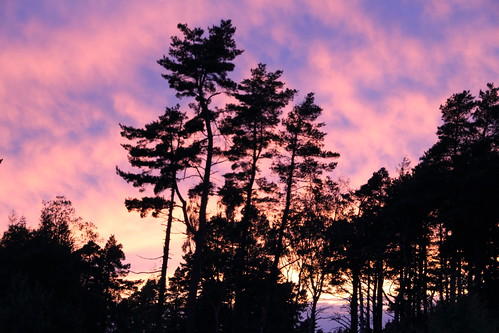 trees sunset sky clouds scotland day cloudy speyside knockando canon60d