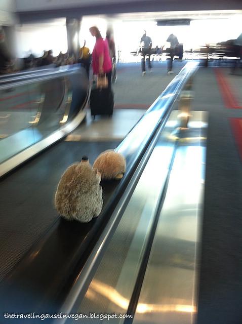 Hedgehogs On A Moving Sidewalk