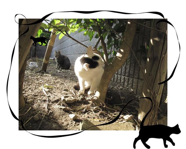 『catzElysium〜石屋の猫4』の画像