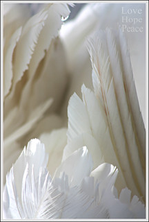 The beautiful white feathers of a swan