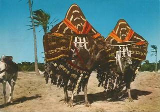 Sur de Argelia - Harem en movimiento