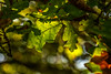 Back-lit foliage by Lee Crosbie