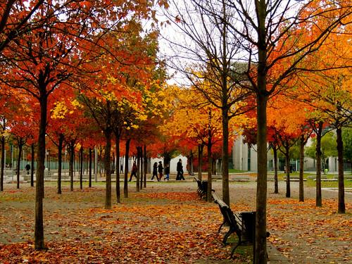 autumn trees leaves herbst blätter bäume