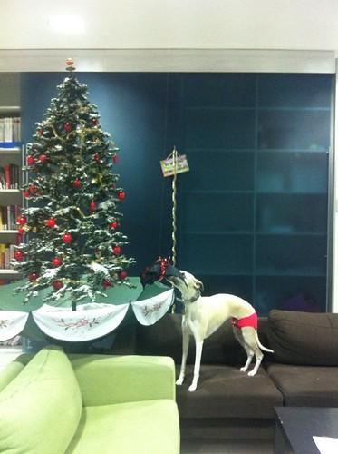 thaya weihnachtsbaum
