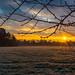 Sunrise Over Hampton Court Green