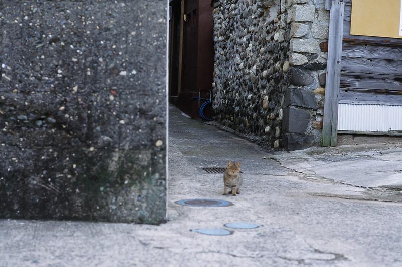 Iwaishima cats