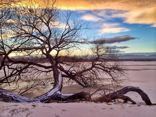 park trees sunset usa lake snow streets tree ice nature night clouds frozen colorado day branches denver sloanslake